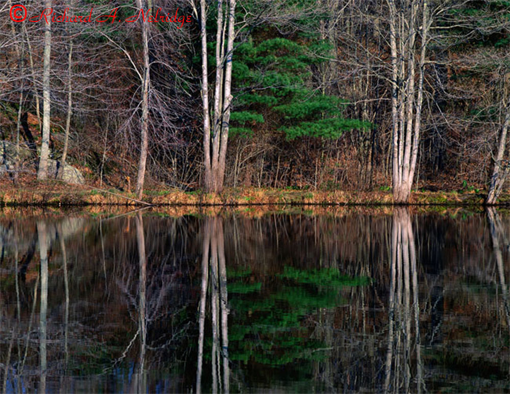 REFLECTION,YOUNG'SPOND2.jpg